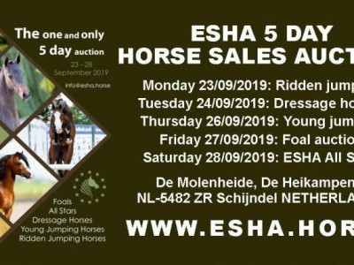 Program 5 days auction Schijndel 23-28/9/2019